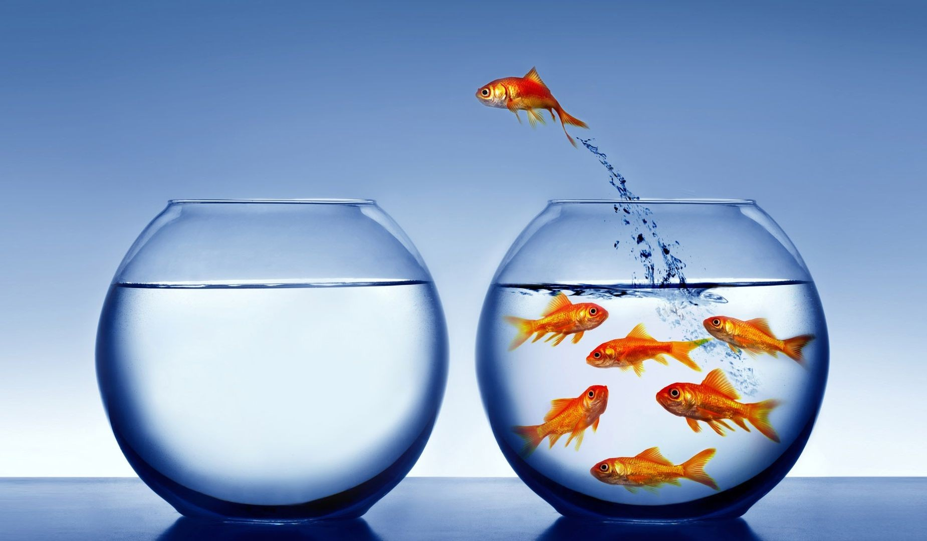 fish-trick-goldfish-bowl-jump-fish-jumping-desktop-background-images